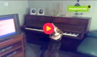 Hond op de piano