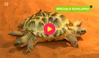 Bijzondere schildpad