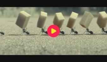 Films op Ketnet: Minuscule