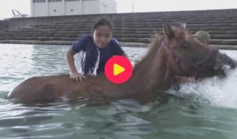 Karrewiet Atlas: Mijn eigen paard