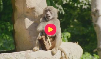 De Zoo: Reeks 1 - Aflevering 21