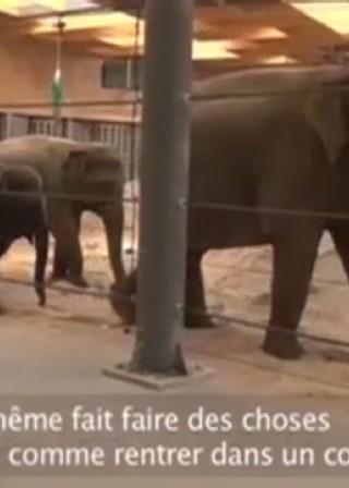 Ben - de olifantenverzorger - dag 3