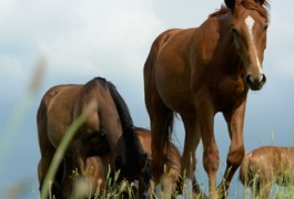 De Boer Op: Paarden
