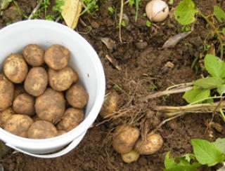 De Boer Op: Aardappelen