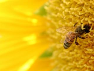 De Boer Op: Bijen