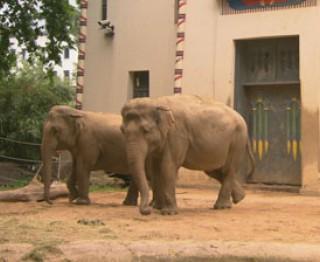 De Zoo-Reporters: de olifant